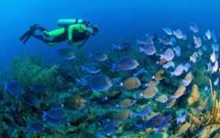 Как выбрать экипировку для подводного плавания?